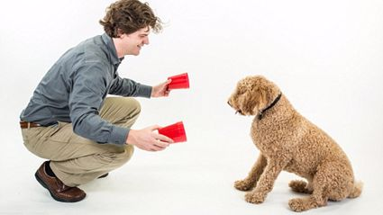 Is Your Dog A Genius? Try The IQ Test For Canines