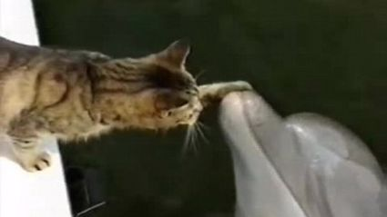 Cat and Dolphins Play Together in this Amazing Video