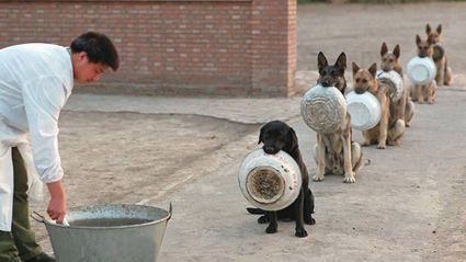 Police Dogs In China Waiting For Food Are Better In Lines Than Most People...