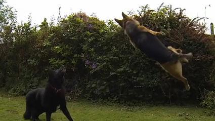 Dog Fetch Fails!
