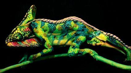 Incredible Chameleon