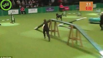 Dog Show Fail!