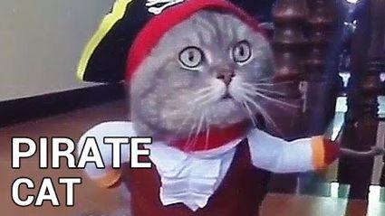 Best Cat Halloween Costume Ever?
