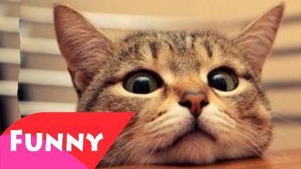 It's Cat Day!