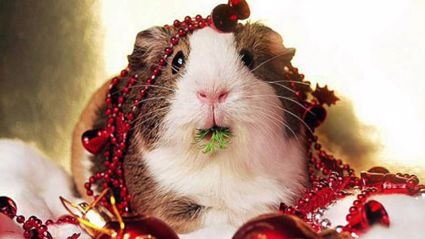Animals Sing The 12 Days of Christmas