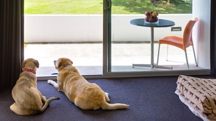 Canine Companions Can Now Stay At Five Star Hawke's Bay Hotel