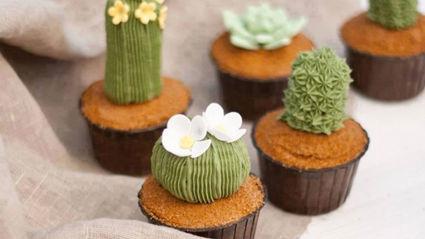 Succulent Cupcakes Recipe