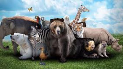 25 Animals That Are Larger Than You Think