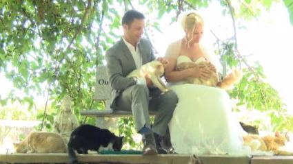 This Canadian Couple Had The Purr-fect Wedding