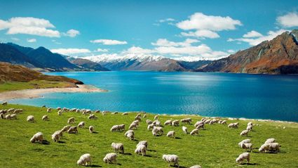 Is New Zealand One Of The Safest Countries In The World?