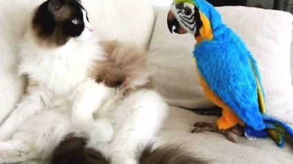 Parrots Annoying Cats: A Compilation