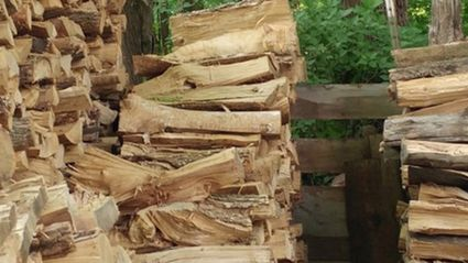 Can You Spot The Cat Among The Kindling?