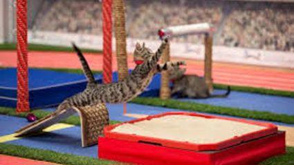 The Kitten Summer Games