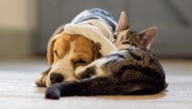 Survey Reveals The Most Popular Pet