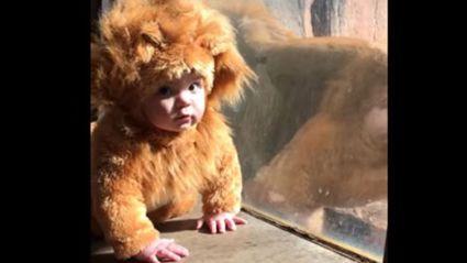 Lion Baby Meets His Namesake