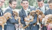 Bachelor Party Turns To Puppy Rescue