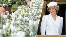 Princess Diana's new ''White Garden'' at Kensington Palace