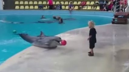 Toddler and dolphin play ball