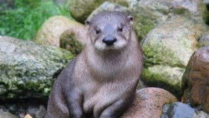 It's Larry ... the world's most seductive otter!