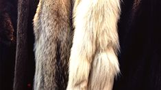 Trudi Bennett - To fur or not to fur