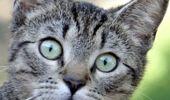 It's Cat Day! (1)
