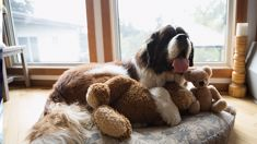 Your dog can help you get a better night's rest