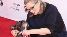 The heartwarming story of Carrie Fisher's dog