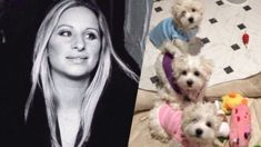 Barbara Streisand reveals she cloned her dog in controversial post