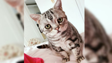 The world's saddest cat?