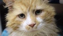 Sad adorable cat story