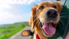 Scientists reveal 10 common misconceptions about canine behaviour