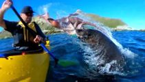 Kayaker gets slapped with an octopus