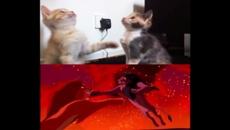 Kittens recreate the epic Lion King fight scene