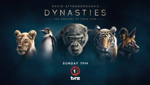 Watch Dynasties And Win!