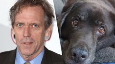 Hugh Laurie's touching tribute to his dog that passed away