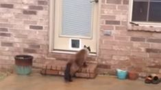 This man's epic cat door fail will have you in fits of laughter!