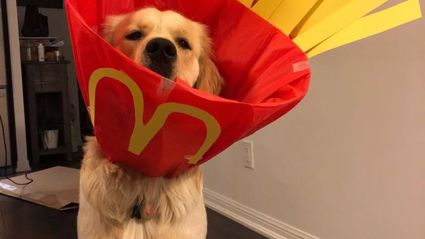 Dog's owner turns his post surgery cone into hilariously adorable costumes