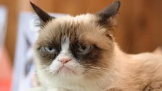 Internet celebrity Grumpy Cat has died aged seven