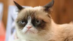Internet celebrity Grumpy Cat has died aged seven