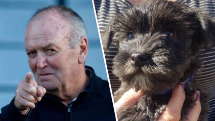 Jason Reeves reveals what he's calling his new puppy ... after asking Sir Graham Henry for permission to use the name