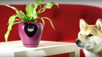 This super cute 'smart' planter will help you keep your indoor pot plants alive