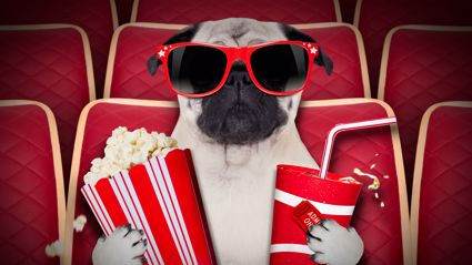 A New Zealand movie theater is now allowing you to bring your dog to the cinema!
