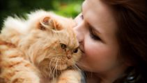 A new vaccine has been developed to stop humans having allergic reactions to cats