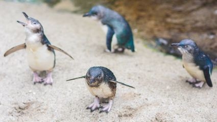 Facebook / National Aquarium of New Zealand