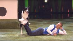 Falco the Border Collie wows America's Got Talent judges with another adorable dance routine