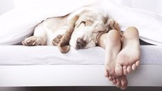 A new study has found letting your dog sleep in bed with you will give you the BEST nights sleep