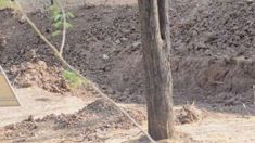 There is a leopard hiding in this photo ... can you spot him?