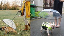 If you have a dog who hates the rain, dog umbrellas now exist!