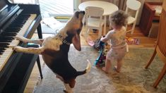 See adorable Buddy Mercury party with his human sister