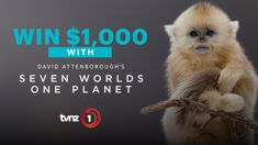 Win $1,000 cash thanks to TVNZ 1 and 'Seven Worlds, One Planet'!
